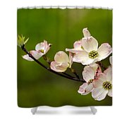 Dogwood Flowers Shower Curtain