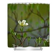 Dogwood II Shower Curtain
