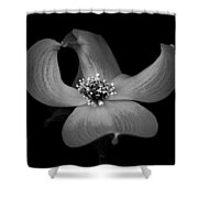Dogwood In Black And White Shower Curtain