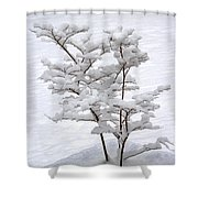 Dogwood In Snow Shower Curtain