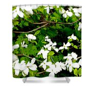 Dogwood In The Wind Shower Curtain
