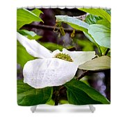 Dogwood In Yosemite Valley-2013 Shower Curtain
