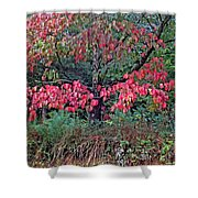 Dogwood Leaves In The Fall Shower Curtain