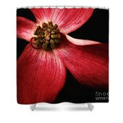 Dogwood Macro Shower Curtain
