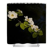 Dogwood On The River Shower Curtain