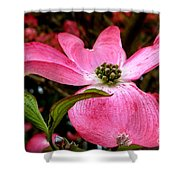 Dogwood Shows Pink Shower Curtain