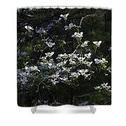 Dogwood Sunset Shower Curtain