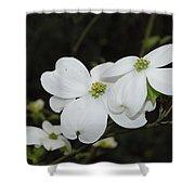 Dogwood Tree Blooms Shower Curtain