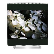 Dogwoods Caught In Central Park Shower Curtain