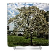 Dogwoods In Summer Shower Curtain