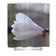 Dolly Horn Magnolia 2 Shower Curtain