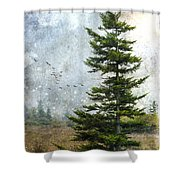 Dolly Sods Pine Shower Curtain