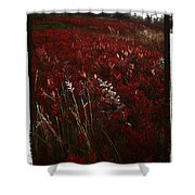 Dolly Sods Shower Curtain