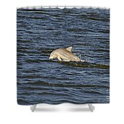 Dolphin At Sea Shower Curtain