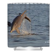 Dolphin I Mlo Shower Curtain