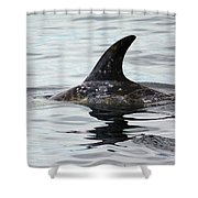 Dolphin In Monterey Shower Curtain
