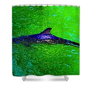 Dolphin In The Shallows Shower Curtain