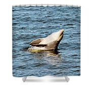 Dolphin Playing Shower Curtain