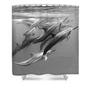 Dolphin Pod Shower Curtain