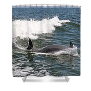 Dolphin Surf Shower Curtain