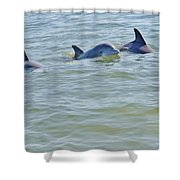 Dolphins 2 Shower Curtain