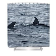 dolphins in Panama Shower Curtain