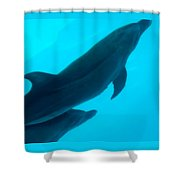 Dolphins Photo Shower Curtain