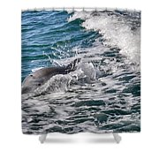 Dolphins Smile Shower Curtain