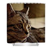 Domestic Cat Shower Curtain