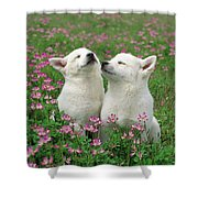 Domestic Dog Canis Familiaris Puppies Shower Curtain by Yuzo Nakagawa