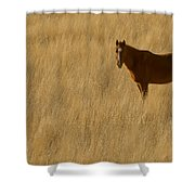 Domestic Horse   #5332 Shower Curtain