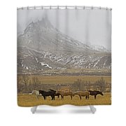 Domestic Horses   #2645 Shower Curtain