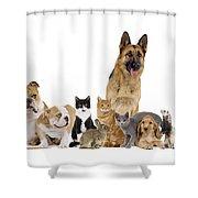 Domestic Mammal Pets Shower Curtain