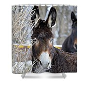 Donkey And The Mule Shower Curtain