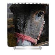 Donkey Behind Fence Shower Curtain