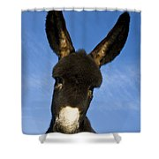 Donkey Foal Shower Curtain