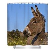 Donkey In Greece Shower Curtain