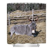 Donkey In Hay Shower Curtain