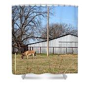 Donkey Lebanon In Oklahoma Shower Curtain