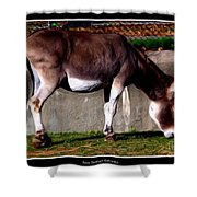 Donkey With Oil Painting Effect Shower Curtain
