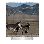 Donkeys In The Colorado Rockies Shower Curtain