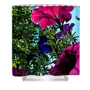 Donna's Blooming Petunias Shower Curtain