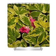 Donna's Rose Petals Shower Curtain