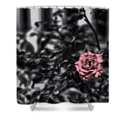 Donna's Rose Shower Curtain