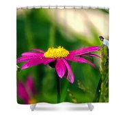 Donna's Teeter Totter Shower Curtain