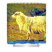 Dont Be Sheep, You Said, But I Just Can't Help It Shower Curtain