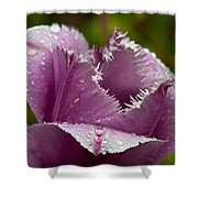 Dont Call Me A Monster Just Because I Have Teeth Purple Tulip Shower Curtain