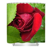 Don't Cry For Me Rosanna Shower Curtain