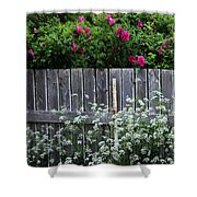 Don't Fence Me In - Wild Roses - Old Fence Shower Curtain