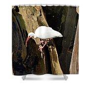 White Ibis Bird Shower Curtain